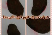 أصدق شيخة روحانية في الوطن العربي أم يوسف0096171137681-اسرار حجر الهبهاب الدموي